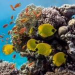 Meerestiere und Korallen als Andenken?