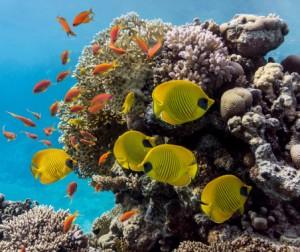 korallen artenschutz meerestiere