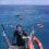 Reisebericht – Schnorcheln Great Barrier Reef Australien